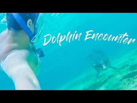 DOLPHIN CAY: SWIMMING WITH DOLPHINS || ATLANTIS BAHAMAS || FAMILY TRAVEL