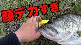 【完全ノーカット】1投でロクマル釣って、すぐ帰る。 thumbnail