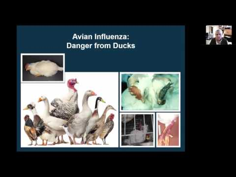 Livestock Diseases and Prevention