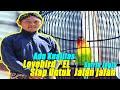 Namanya  El  Lovebird Konslet Dari Satrio Jogja Siap Untuk Diajak Jalan Jalan  Mp3 - Mp4 Download