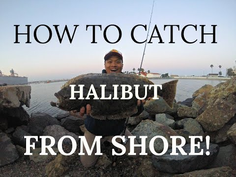How to Catch Halibut From Shore - San Diego Bay