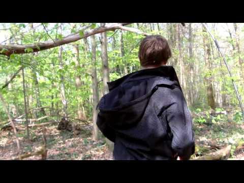 aventure de bois