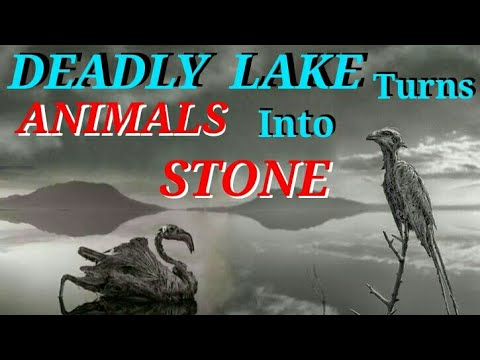 LAKE NATRON which turn Animals into Stone    Located in Tanzania    Africa   