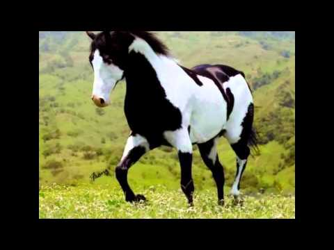 SSO - 11 New Horse Breeds!? from YouTube · Duration:  2 minutes 51 seconds  · 12.000+ views · uploaded on 12.09.2016 · uploaded by Aaliyah Summercake