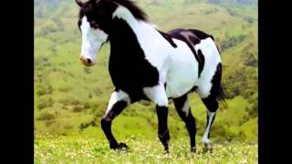Beautiful Paint Horses