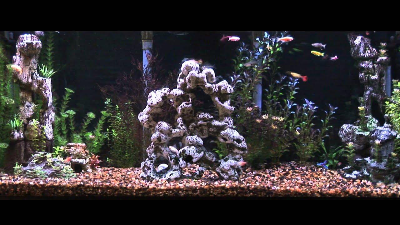 virtual desktop aquarium youtube
