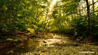 【癒し】川のせせらぎとひぐらしの鳴き声3時間版/作業用BGM・勉強用BGM