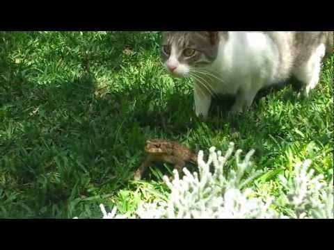 Cat vs. Frog