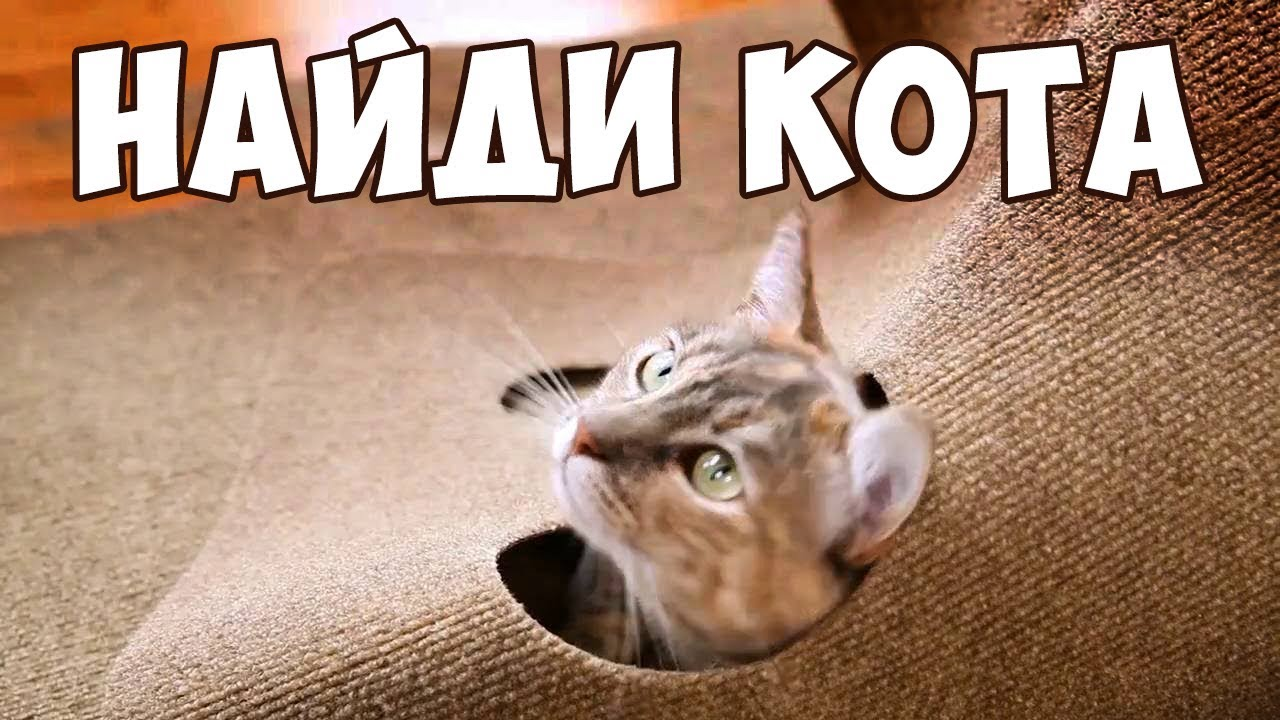 НАЙДИ КОТА 🐈 Попробуй найти кота на фото | БУДЬ В КУРСЕ TV ...