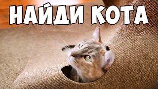 НАЙДИ КОТА 🐈 Попробуй найти кота на фото | БУДЬ В КУРСЕ TV