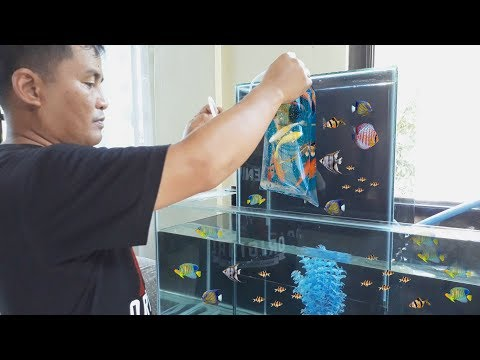 "HOW & STYLE: MULTI LEVEL Aquarium tank  "" MODERN DESIGN"""