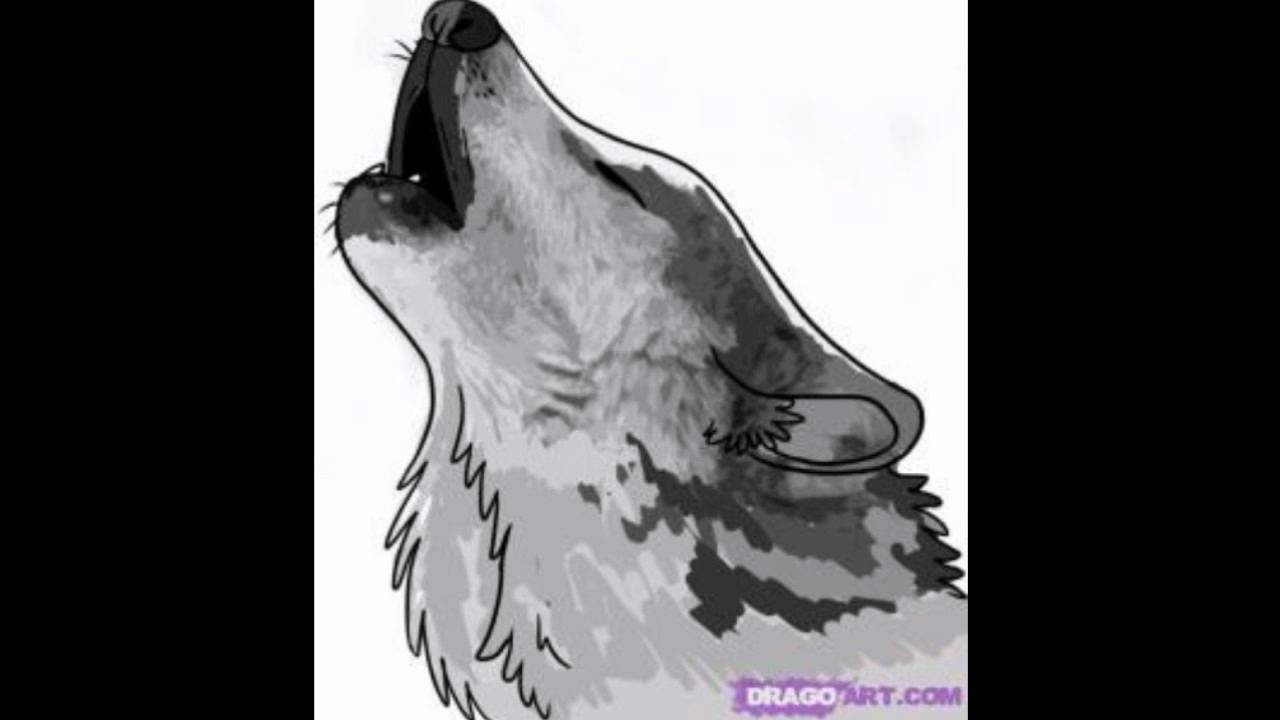 Como Dibujar Un Lobo How To Draw A Wolf Youtube