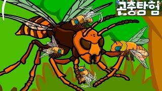 곤충탐험 #14 꿀벌 vs. 장수말벌 전투 | Honey bee vs. Vespa mandarina | Insects adventure for kids animation