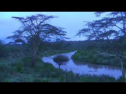 African River Wildlife Cam 03-15-2018 20:23:45 - 21:23:46