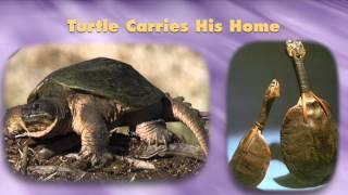 #1 Hodinohson:ni Creation Story: Lessons of Life