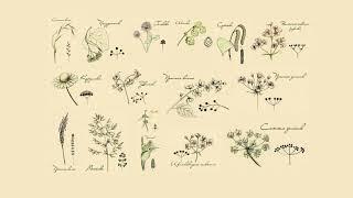 Как определять название растений с детьми