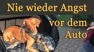 Wie Hunde die Angst vor dem Auto spielend überwinden. Live Training