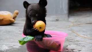 Baby Bear Born On A Bile Farm Grows Up So Happy