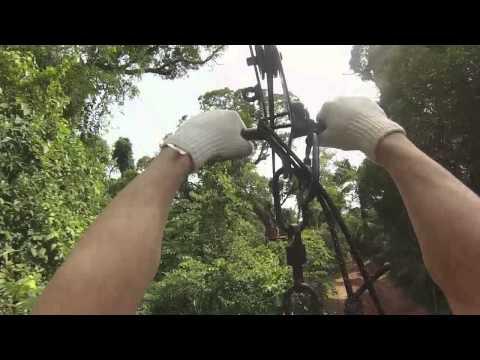 Tree Canopy in Iguazu