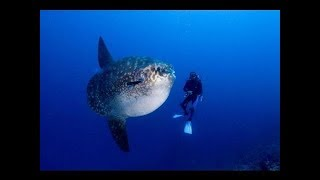 Ocean of Giants - Wildlife Animal -National Geogaphi Documentary