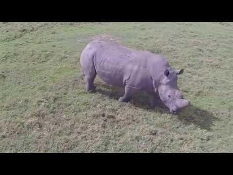 Kenya's Rhino Rendezvous
