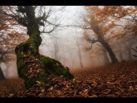 8 мистических мест Подмосковья, про которые рассказывают разные «страшилки»