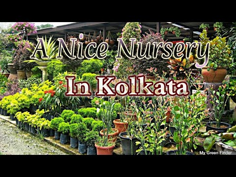 Nice Visit To An All Round Nursery In Kolkata