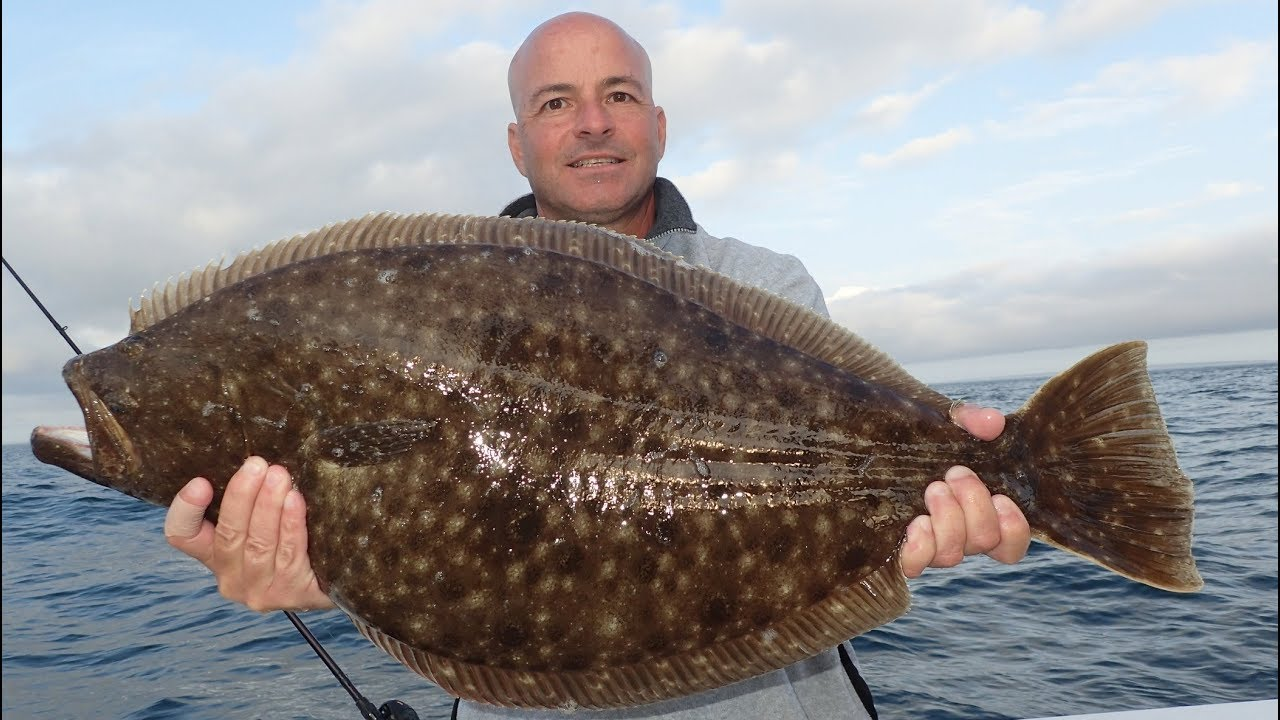 Two Monster Fluke (Flounder) and a 32-lb Bass Released!