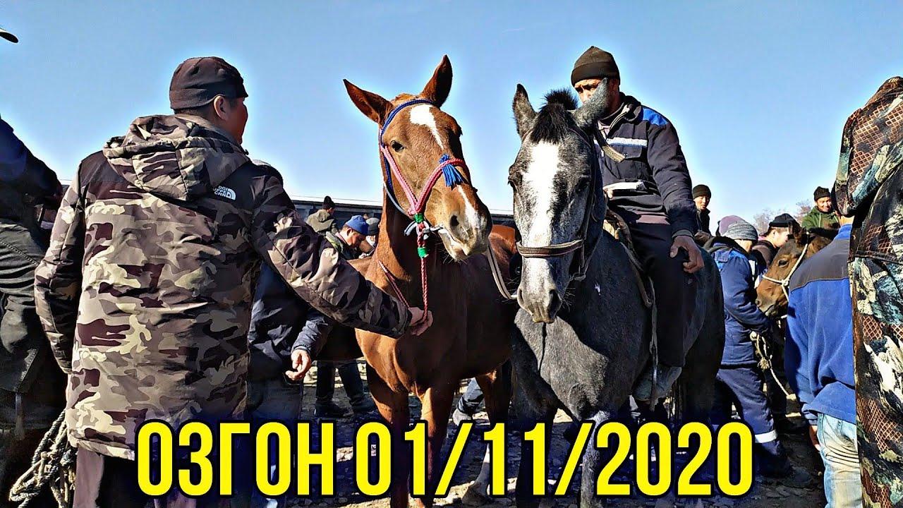Сындуу КУНАН Тайлар БЭЭ Байталдар ОЗГОНГО Толду 01/11/2020
