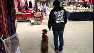 Reactive Boxer Gains Remarkable Confidence With Off Leash K9 Training Columbia
