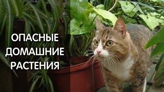 Эти растения – яд для кошек и собак!