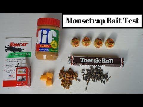 Mousetrap Bait Test With Motion Cameras & Wild Mice/Rats. What Is The Best Mousetrap Bait?