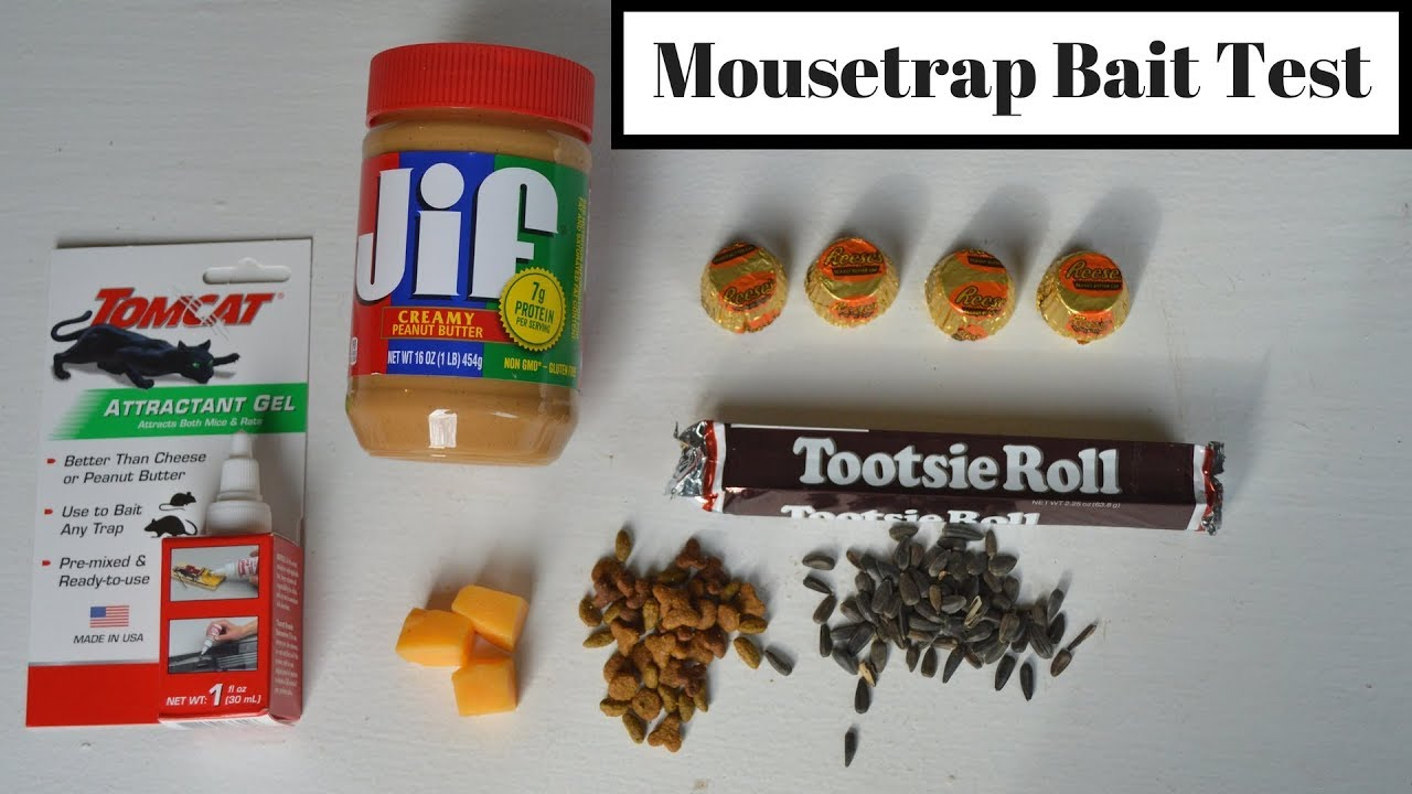 Mousetrap Bait Test With Motion Cameras Wild Mice Rats What Is The Best Mousetrap Bait Youtube