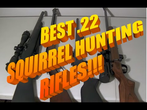 Best Squirrel Hunting Tips (22LR Rifles)