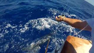 2017 Bermuda Big Game | Team Mama Who | Blue Marlin