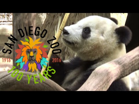 San Diego Zoo Tour & Review