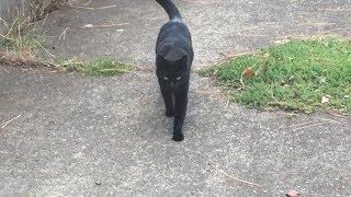 We just saw the cutest cat on one of our neighborhood walks, looks like Rocky! (mMc 0498)