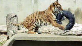 شلوار جین پاره شده توسط حیوانات؛ مُد جدید در ژاپن