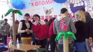Шоу норвежских лесных кошек, 2.02.2014, Новосибирск, часть 3