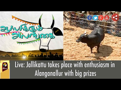 Jallikattu Held with Zeal in Madurai Alanganallur with Gold Coins | EXCLUSIVE VISUALS