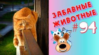 Приколы с Животными #94 / Смешные Животные 2020 / Приколы / Приколы про Животных / Лучшие Приколы