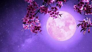 Tranquil Sleep | Deep Sleep Music 528Hz | Miracle Healing Tone | Positive Energy Cleanse
