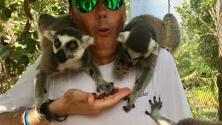 Playing with the lemurs of Necker