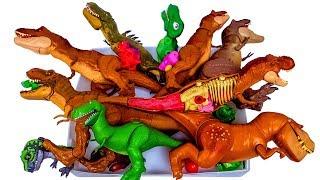 Lots of dinosaurs, Jurassic World Tyrannosaurus T-rex dinosaur toys 공룡 티렉스 티라노 장난감