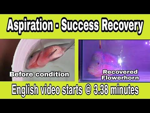 Flower Horn Lying Flat- Successful Treatment Video