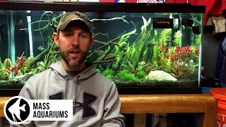 Which SUBSTRATE is best for your AQUARIUM?