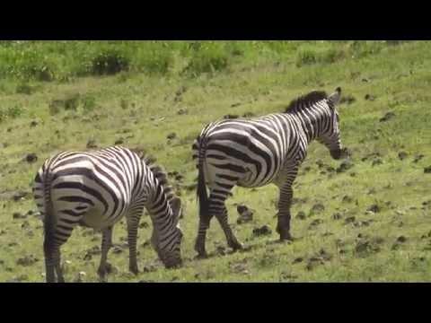 Safari in the Ngorongoro Crater Tanzania February 2013