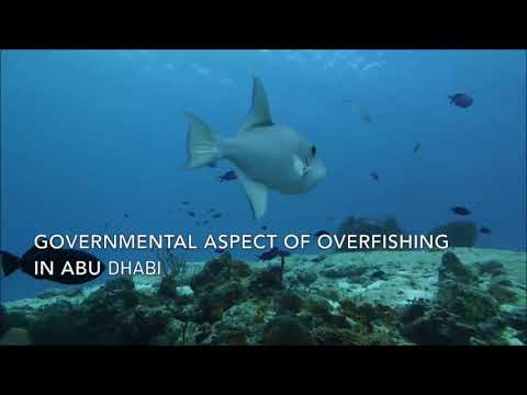 Overfishing in Abu Dhabi 🇦🇪