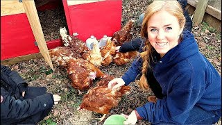 How We Got Our Tiny Backyard Ready for Chickens!