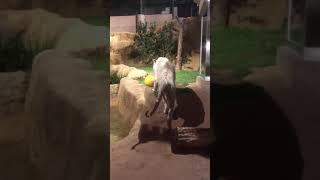 動物園に行きました.